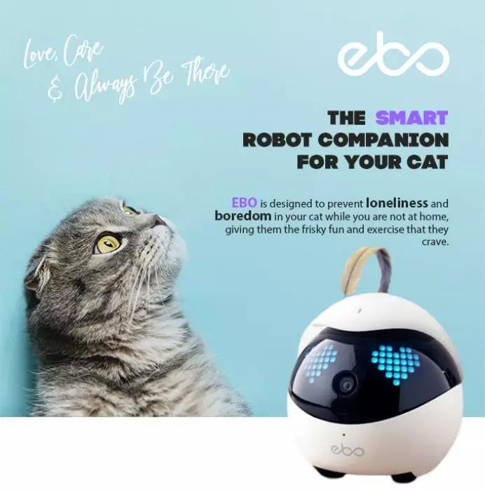 撸猫神器:既能翻滚跳舞又能远程操控,让你一直撸猫一直爽  海外黑科技图2