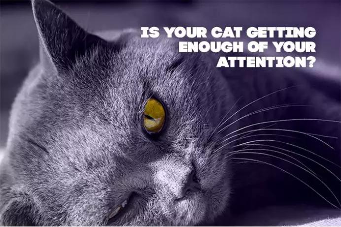 撸猫神器:既能翻滚跳舞又能远程操控,让你一直撸猫一直爽  海外黑科技图3