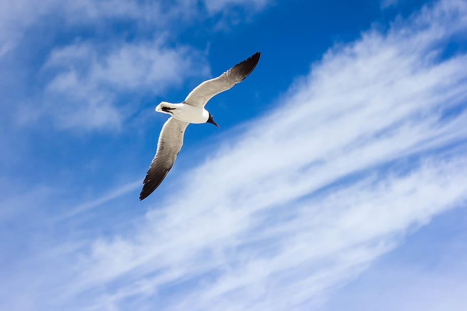 photo-of-flying-white-and-black-bird-during-daytime.jpg