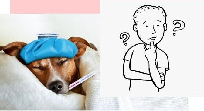 准确率可达92%的宠物健康AI扫描器,让你速成宠物医生