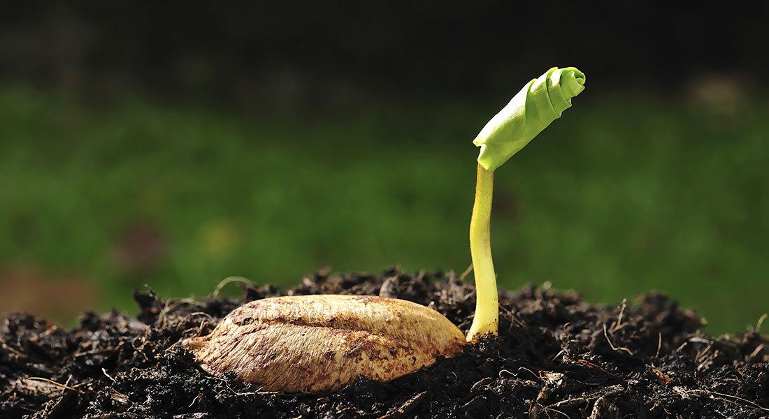 Seed-Program.jpg