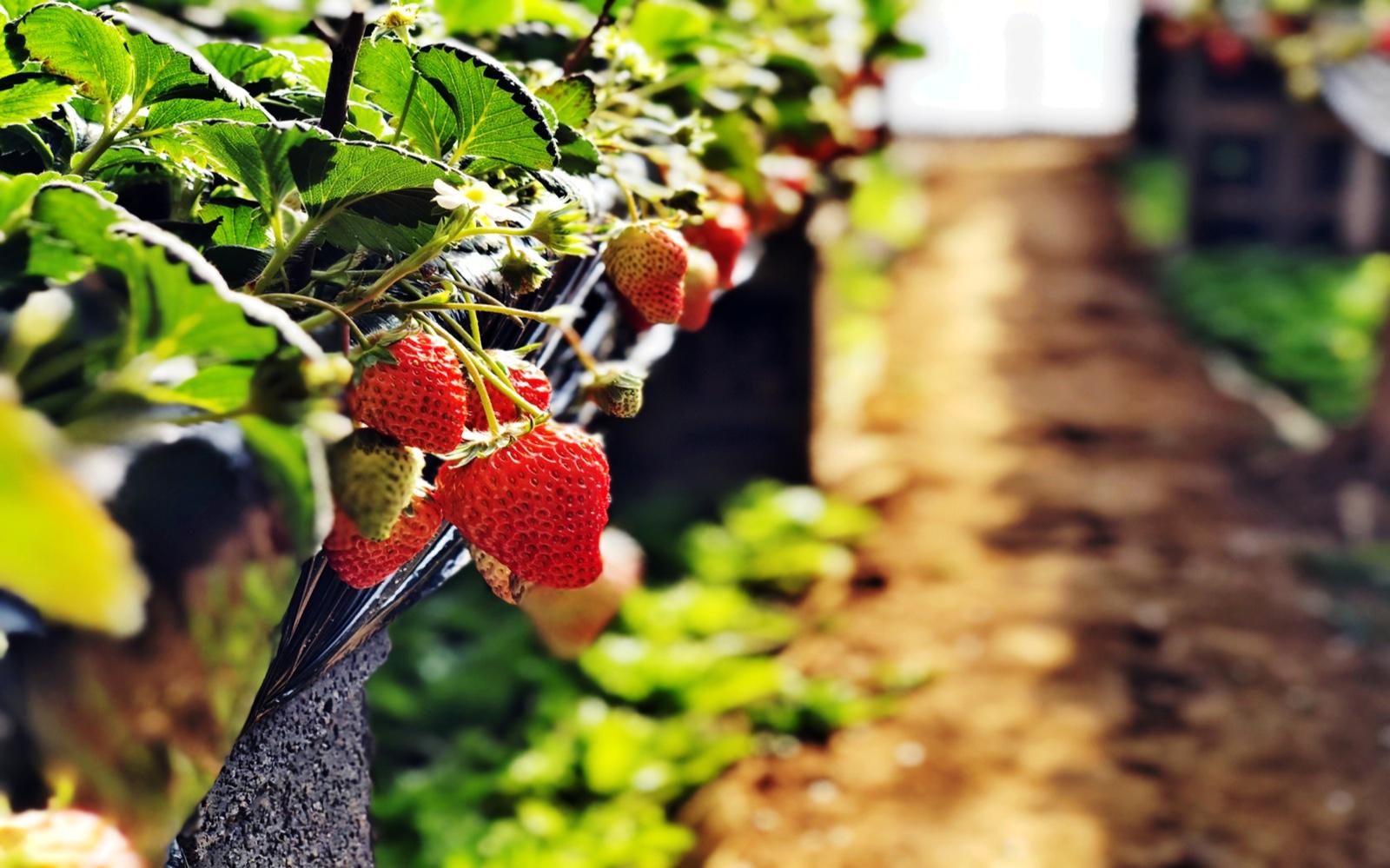 联点数据基于农业智能垂直领域,实现种植生产标准自动化